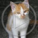 zwierzęta kot kotek zwierzak kociak zwierzątko koteczek zwierzatko pupilek