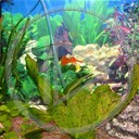 ryby akwarium rybki natura zwierzeta