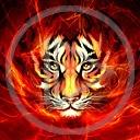 kot kotek tygrys koty drapieżniki tygrysy kociak drapieżnik dzikie koty dziki kot