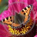 motyl lato motylek motyle owad natura