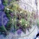 kwiat kwiatek kwiatuszek natura kwiatuszki meszek