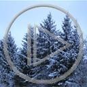 zima śnieg choinki natura drzewko drzewka choinka