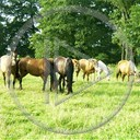zwierzęta koń konie konik klacz kon