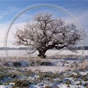 krajobraz drzewo zima widok krajobrazy