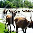 zwierzęta krajobraz stado jeleń renifer przyroda natura pejzaż dzikość
