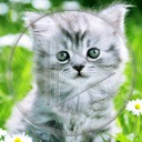 zwierzęta kot kotek koty kotki zwierze kociaki