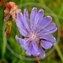 kwiaty kwiatek roślina rośliny przyroda natura kwiatki