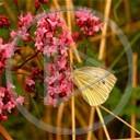 kwiaty motyl owady rośliny roslinność
