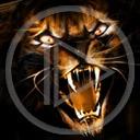 zwierzęta zęby kot tygrys koty drapieżniki kły tygrysy drapieżnik dzikie koty zwierze dziki kot