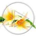 kwiat miłość roślina tulipan wielkanoc piękne kwiatuszek dla życzenia rośliny fajne przyjaciel przyjaciela śliczne ładne miłośne