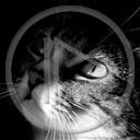 zwierzęta kot kotek kotki kotecek szare bure