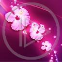 kwiaty kwiatek wzorek roślina wzór kwiatuszek kwiatki