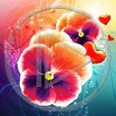 serce kwiat kwiaty kwiatek roślina bratek rośliny kwiatki serca bratki fiołek