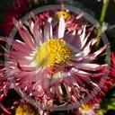 kwiat kwiaty roślina rośliny kwiatki