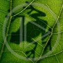 żaba liść liście cień ropucha żaby