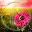 kwiat kwiaty kwiatek owady roślina biedronka rośliny owad kwiatki biedronki