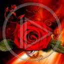 kwiat kwiaty kwiatek róża roślina rośliny kwiatki róże