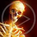 kości czaszka kościotrup szkielet śmierć horror czaszki straszne czacha czachy szkielety kościotrupy