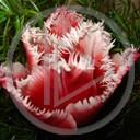 kwiat miłość kwiaty kwiatek zieleń roślina życie rośliny uczucie przyroda natura kwiatki czerwień