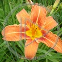 kwiat miłość kwiaty kwiatek zieleń roślina życie rośliny uczucie przyroda natura kwiatki