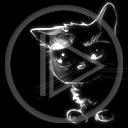 zwierzęta kot kotek koty kotki kociak zwierze kociaki