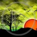 słońce zachód niebo las natura