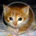 zwierzęta kot kotek koty słodki kotki koteczek zwierze