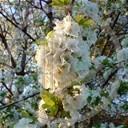 kwiat kwiaty roślina wiosna rośliny