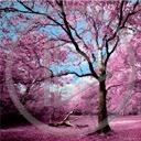 krajobraz drzewo roślina rośliny przyroda natura drzewa