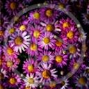 kwiat kwiaty kwiatek roślina bukiet rośliny kwiatki