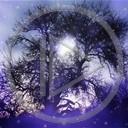 drzewo plenery widok magia przyroda natura widoki plener