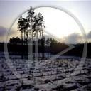 las zima przyroda drzewa krajobrazy