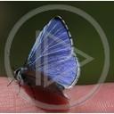 motyl motylek przyroda natura niebieski na palcu
