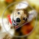 zwierzęta pies szczeniak jamnik słodki
