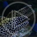 zwierzęta ryba ryby akwarium woda