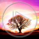 krajobraz drzewo widok przyroda natura drzewa plener