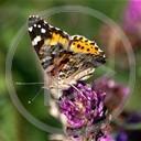 kwiatek lato owady motyle natura