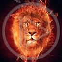 zwierzęta ogień kot głowa lew koty drapieżniki płomień głowy lwy drapieżnik zwierze dziki kot
