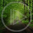 las zieleń natura drzewa zielony las