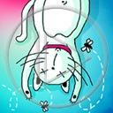 zwierzęta kot kotek koty mucha muchy kotki zwierze