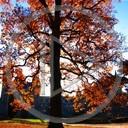 drzewo jesień liście widok rośliny natura drzewa krajobrazy plener