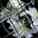 kwiat kwiaty roślina rośliny szklany
