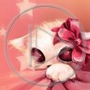 zwierzęta kot kotek koty kotki zwierze