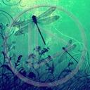 owady wzór owad wzory ważka ważki