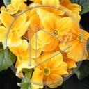 kwiat kwiaty roślina rośliny ogród natura