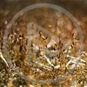 las Makro rośliny mech bokeh