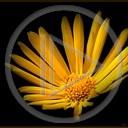 kwiat kwiaty rośliny przyroda natura żółty kwiat