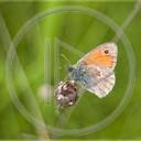 zwierzęta kwiatek motyl owady wiosna motyle łąka