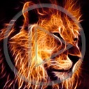 zwierzęta kot lew koty drapieżniki lwy drapieżnik dzikie koty zwierze