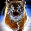 zwierzęta kot tygrys tygrysek koty tygrysy dzikie koty zwierze dziki kot